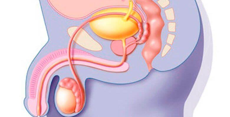 Мочеиспускательный канал у мужчин болезни