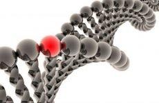 Аналіз на синдром Жильбера (генетичний): діагностика, як його здавати