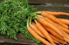 Правила застосування морквяної бадилля при гемороїдальних вузлах
