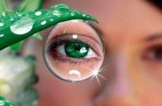 Продукти для очей. Як харчуватися для гарного зору
