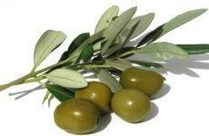 Як вибрати оливки: поради правильного вибору оливок