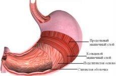 Болить шлунок і нудить, що робити якщо виникає біль в животі