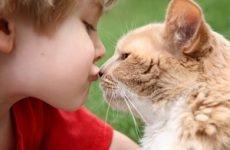 Котячий і стригучий лишай у людини: як виглядає, особливості лікування та зараження від кішки