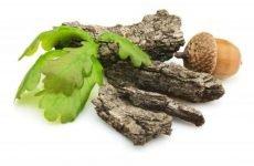 Ефективні способи використання кори дуба для лікування проносу