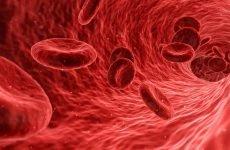Норма лейкоцитів в крові у чоловіків: лейкопенія, лейкоцитоз