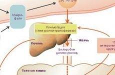 Білірубін в сечі: що це значить і яка норма білірубіну