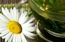 Ромашка сечогінна чи ні: є рослина сечогінним засобом
