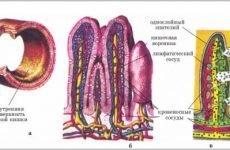 Біль внизу живота у чоловіків, причини тягне біль у нижній частині