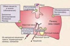 Вітаміни для печінки: назви препаратів, аптечні комплекси
