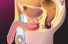 Урологія у чоловіків симптоми різновиди діагностика усунення рекомендації