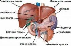Ворітна вена печінки: норма розмірів, захворювання, діагностика