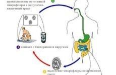 Таблетки від проносу (діареї) для дорослих: недорогі та ефективні засоби швидкої дії
