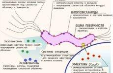 Аналіз крові на хелікобактер пілорі: розшифровка, норма антитіл, як здавати