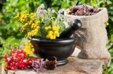 Трави для нирок: нирковий збір для лікування і його склад