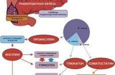 Гормони підшлункової залози: їх функції, як вони називаються, біологічна роль, препарати