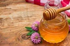 Кращі способи лікування гемороїдальних вузлів за допомогою меду