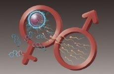 Яйцеклітина і сперматозоїд: відмінності, подібності, відмінності