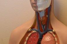 Гепатит у чоловіків: ознаки, симптоми, лікування