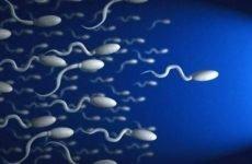 Чому у чоловіків густа сперма, причини, профілактика