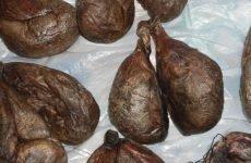 Струмінь бобра: приготування настоянки, показання, протипоказання