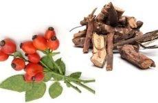 Коріння шипшини для лікування каменів у нирках: рецепт приготування кореня при каменях у нирках