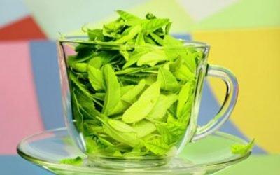 Користь зеленого чаю і можливу шкоду для організму і здоров'я