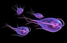 Антибіотики при холециститі, лікування при запаленні жовчного міхура