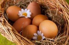 Як правильно зберігати яйця – способи та умови