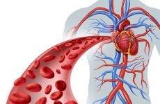 Що таке недостатність кровообігу?
