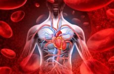 Особливості кровоносних судин