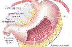 Симптоми і лікування варикозу шлунка