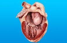 Все про кардіоміопатії у дорослих і дітей