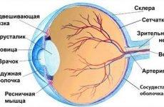 Зміцнення судин очей: сосудоукрепляющим препарати та народні засоби