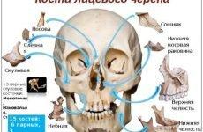 Перелом лицьової кістки – всі можливі травми і наслідки