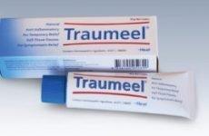 Препарат Траумель С – ампули, уколи, гель, таблетки: інструкція по застосуванню, від чого допомагає?