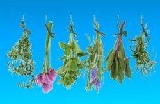 Трави, що підвищують тиск – елеутерокок