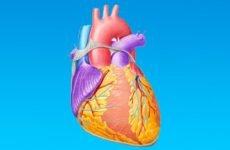 Що таке синусовий ритм і як розшифрувати кардіограму