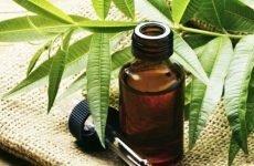 Масло чайного дерева від грибка нігтів: як лікувати оніхомікоз