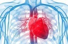 Розшифровка кардіограми (ЕКГ) серця для чайників: норми в таблиці