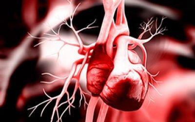Збільшення лівого шлуночка серця: причини і лікування, наслідки