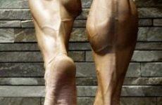 Будова ноги нижче коліна: картинки кісток і м'язів гомілки у людини