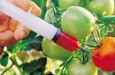 Отруєння пестицидами: симптоми і наслідки, перша допомога та профілактика отруєнь отрутохімікатами