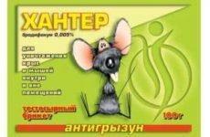 Симптоми отруєння щурячою отрутою у людини, смертельна доза речовини і методи надання першої допомоги