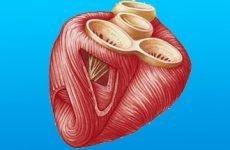 Розрахунок маси міокарда лівого шлуночка: норма