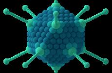 Аденовірусна інфекція у дітей симптоми і лікування