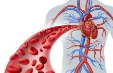 За яким судинах кров рухається до серця?