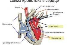 Вправи для зміцнення серцево судинної системи