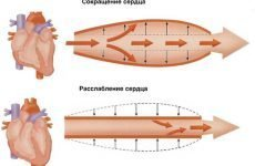 Артеріальний тиск у дітей – таблиця і норма за віком