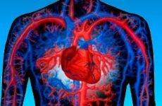Збільшене серце – причини великої шлуночка, лікування і наслідки для дорослих і дітей