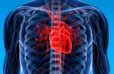 Помилкова або додаткова хорда в серці у дитини і дорослого